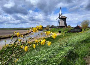 Lees meer over het artikel 9 Tips voor een weekendje Laag Holland