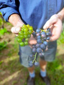Lees meer over het artikel Mijn 7 favoriete wijngaarden in de Achterhoek